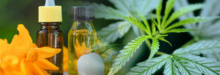 Bienfaits des plantes dans les produits bio de bien-être