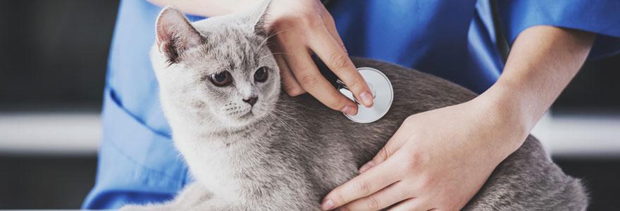 Trouver votre urgence vétérinaire à Toulouse