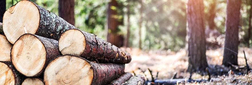 Buches de bois sec